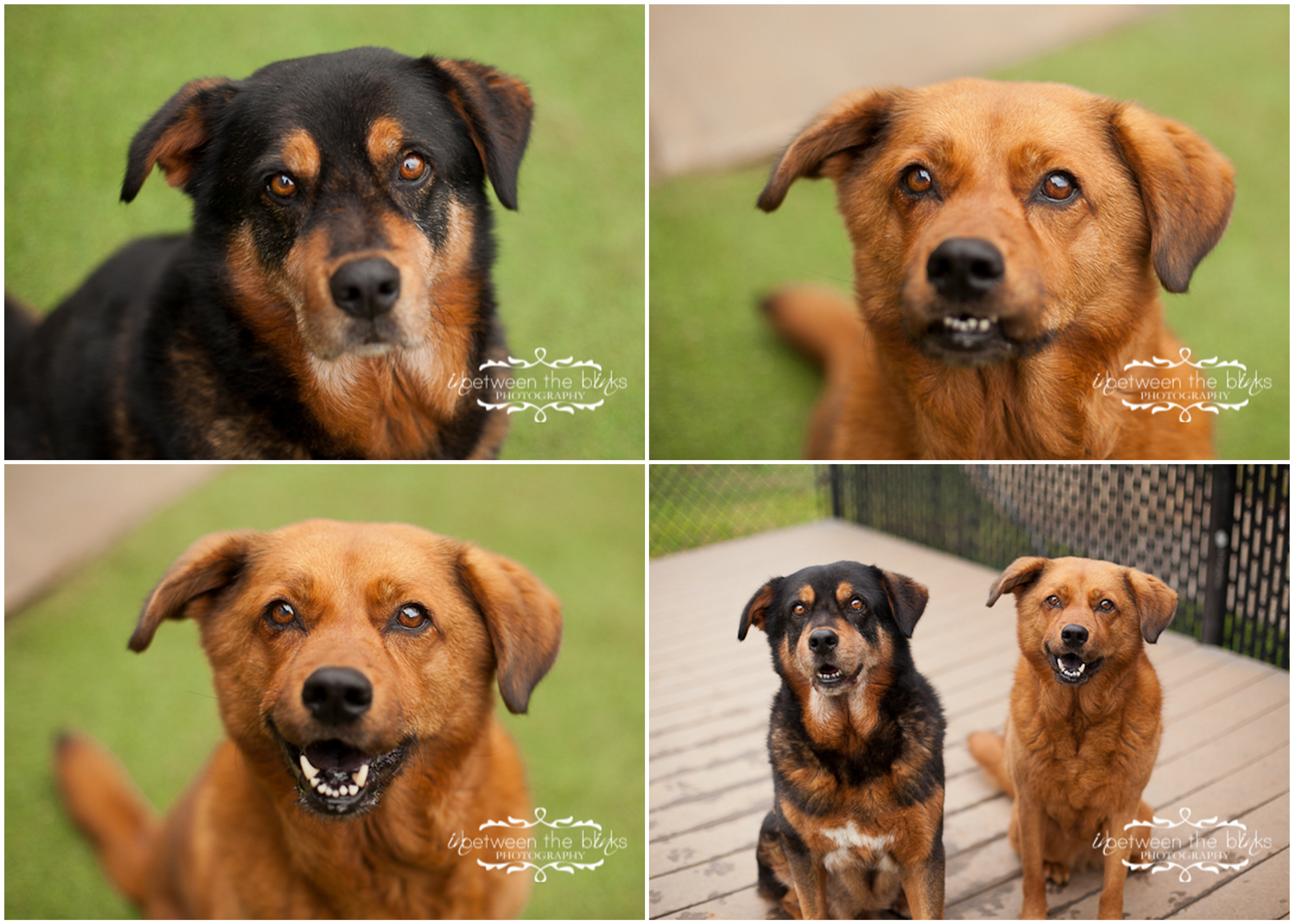 Raleigh County Dog Rescue