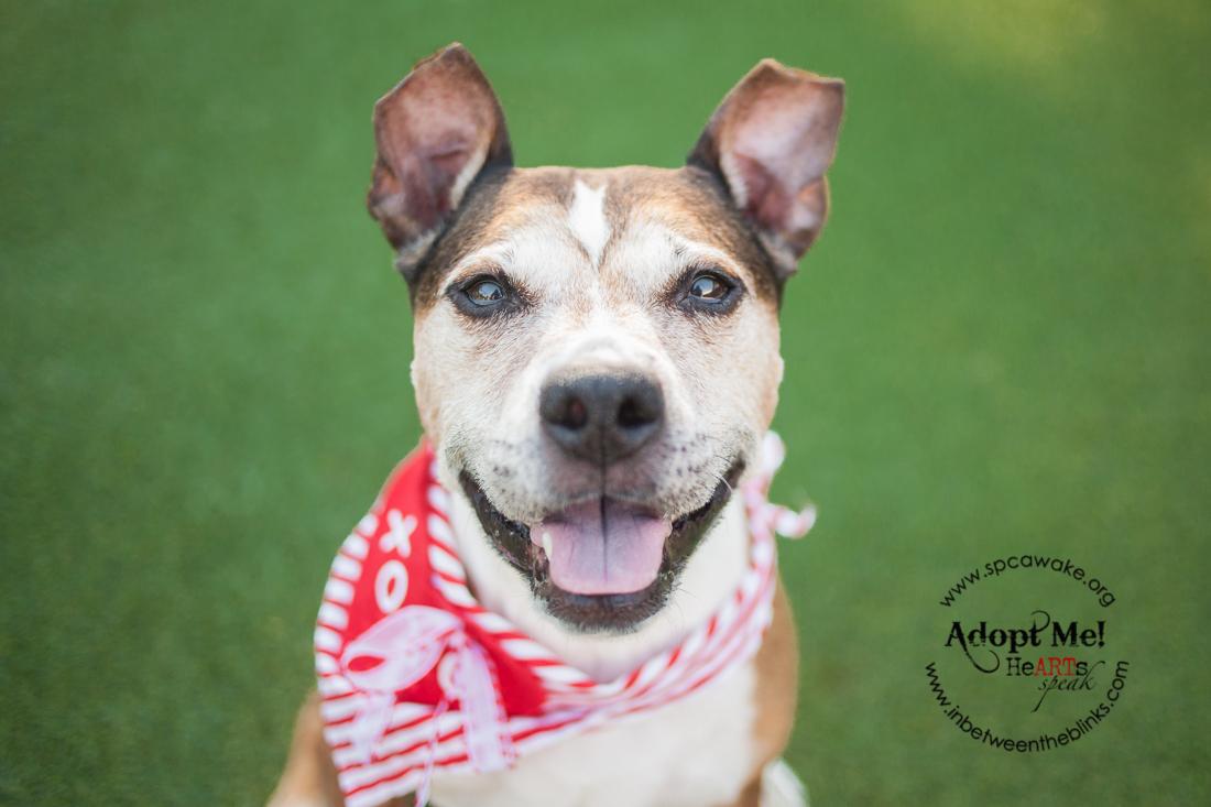 Wake County Animal Shelter Adoptable Dogs