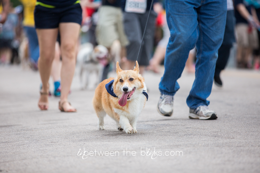 Wake County Spca Dog Walk