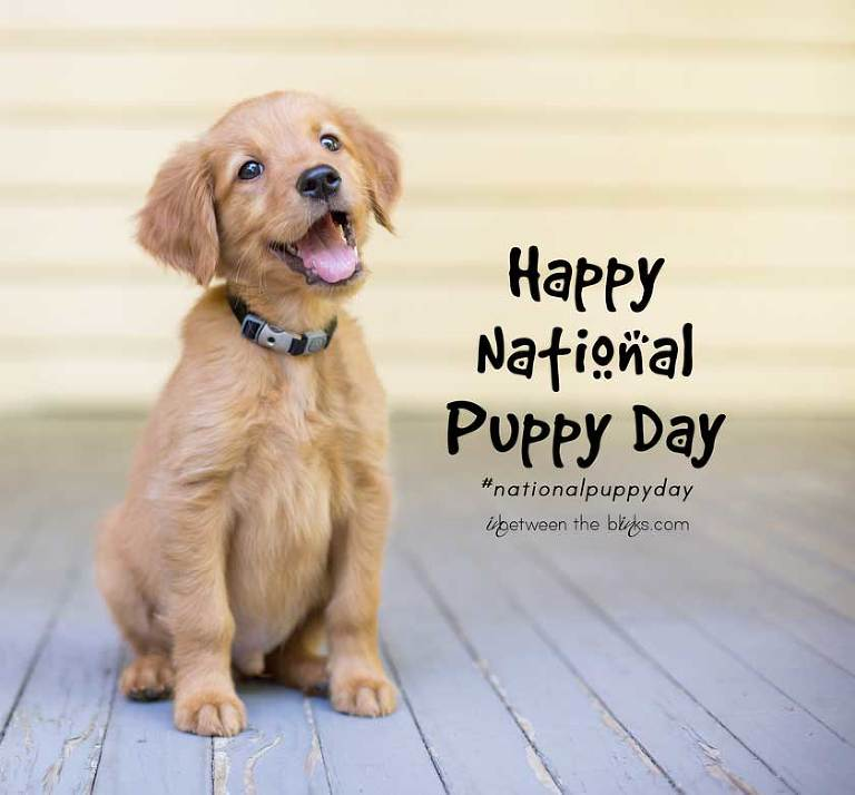 http://inbetweentheblinks.com/wp-content/uploads/2016/03/National-Puppy-day(pp_w768_h714).jpg