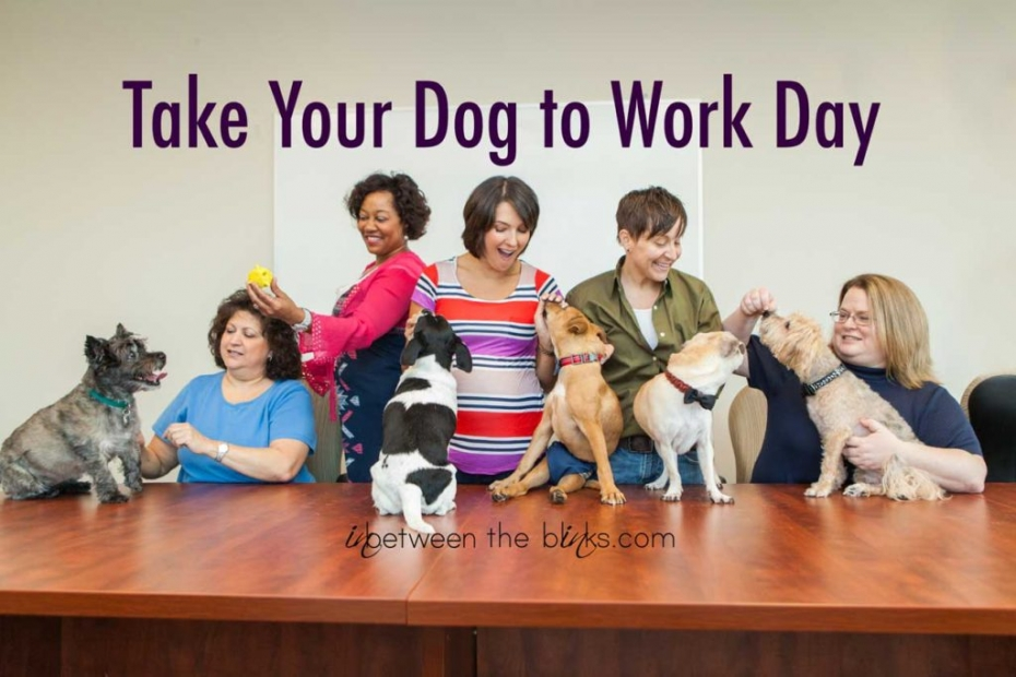 The Staff at Pet Partners Insurance say everyday is  take your dog to work day.