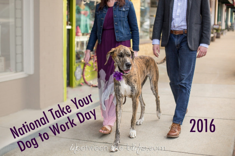 National Take your dog to work day 2016